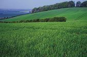 Farmland The Barton Hills Bedfordshire