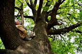 Rest On A Tree