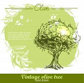 ������, ������: Vintage hand drawn olive tree and olive branch