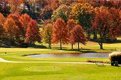 Autumn Foliage At The Golf Course