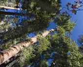 Trees.