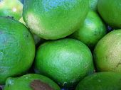 Large Limes