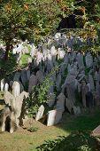 Jewish Graveyard 2