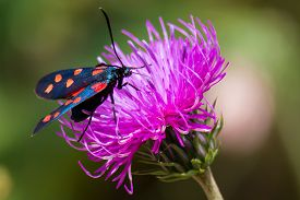 picture of six-petaled  - close up of a moth six - JPG