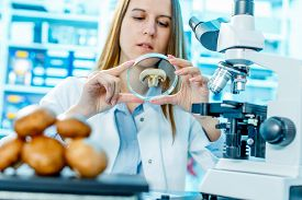 stock photo of pesticide  - checking food mushrooms on the content herbicides and pesticides - JPG