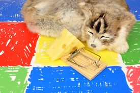 foto of mouse trap  - Cat sleeping next to a mouse trap baited with a wedge of cheese on a colourful floor background - JPG