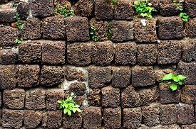 picture of pumice-stone  - Little plant grow on black volcanic pumice stone wall - JPG