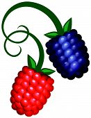 Two Berries