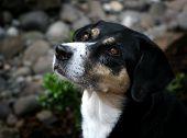 Handsome Dog Profile