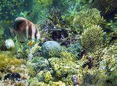 Underwater Garden, Great Barrier Reef, Australia