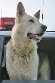 K9: Dutiful Dog With Badge