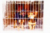 Two Cute Strayed Dogs In Dog Shelter And Computer Painting Effect. poster