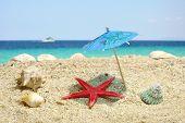 Starfish Under Sun Umbrela Shadow
