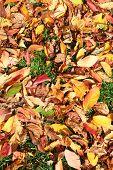 Fallen Leaves In Fall