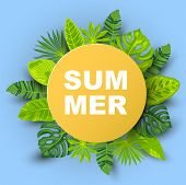 Green Summer Tropical Background With Exotic Leaves. Place For Text. Design Element With Shadow On B poster