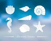Silhouettes Of Sea Shells, Seahorse And Starfish On The Colorful Background With Defocused Lights poster