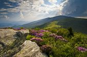 foto of appalachian  - Appalachian Trail Roan Mountains Rhododendron Bloom on Blue Ridge Peaks scenic landscape photography - JPG