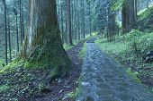 Nikko Pathway
