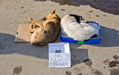 Stray Dogs Sleeping On The Ground. Text In Russian: On Food  For Dogs