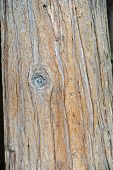 Bark Of A Tree As Background