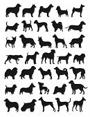 stock photo of pitbull  - Many dog species in silhouettes - JPG