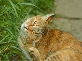 stock photo of flea  - Striped scratching fleas outdoors against green summer grass - JPG