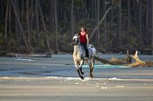 stock photo of bareback  - woman riding galloping horse bareback on the beach - JPG