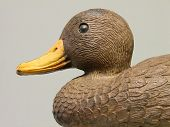 Duck Decoy