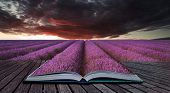 Creative Concept Pages Of Book Stunning Lavender Field Landscape Summer Sunset Under Moody Red Storm