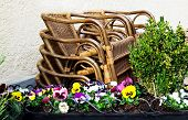 Stacked  Rattan Chairs