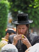 BNEI-BRAK, ISRAEL - SEPTEMBER 22: An orthodox Jew in long sidelocks and black hat picks citrus befor