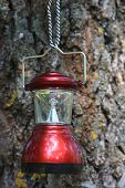 camp lantern on cortex tree background