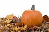 Halloween Pumpkin And Leaves