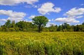 A summer landscape eastern township Quebec Canada
