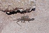 Lizards.