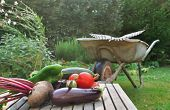 stock photo of wheelbarrow  - Freshly harvested vegetables placed on a plank in front of a wheelbarrow in the garden - JPG