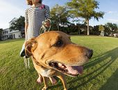 girl walking dog in park, fisheye view with emphasis on dog.