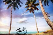 Bicycle Near The Ocean