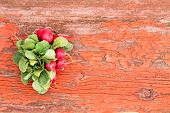 Bunch Of Fresh Radishes And Leaves