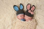 stock photo of ears  - Sleeping 2 month old newborn baby twins wearing bunny costumes - JPG