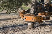 picture of vibrator  - Vibrating machine in an olive tree Jaen Spain - JPG