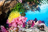 A beautiful, exotic tropical reef covered with vibrant soft and hard corals and a yellow crinoid in clear water.