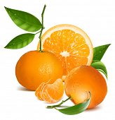 Photo-realistic vector illustration. Fresh tangerine fruits and orange with green leaves and slices.