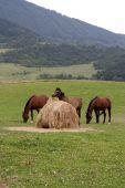 Three Horses And Straw Bale