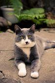ashy gray cat lying on the street summer