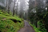 pic of twisty  - Twisty road through the forest to Hatu Peak in India