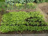 Beans Organic Garden