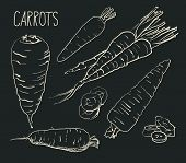 Set simple sketch icons carrots isolated on white background. Vegetables. Food. Hand drawn vector
