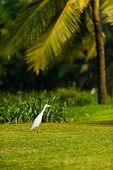 Bird On Goa