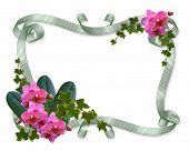 Orchids and ivy floral border ribbons